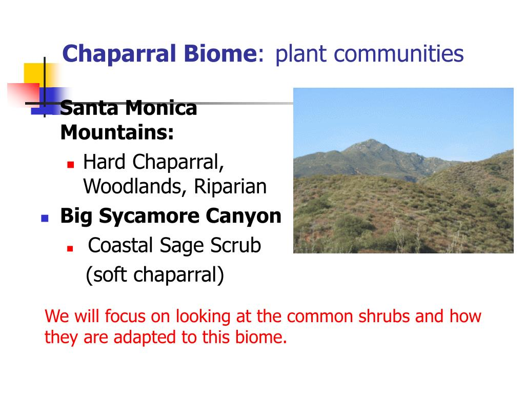 chaparral biome plant communities l.