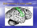 brain sensory motor areas