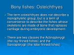 bony fishes osteichthyes