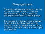 pharyngeal jaws78