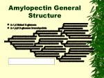 amylopectin general structure