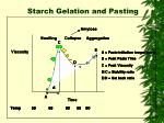 starch gelation and pasting