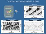 circadian clock manipulations activity