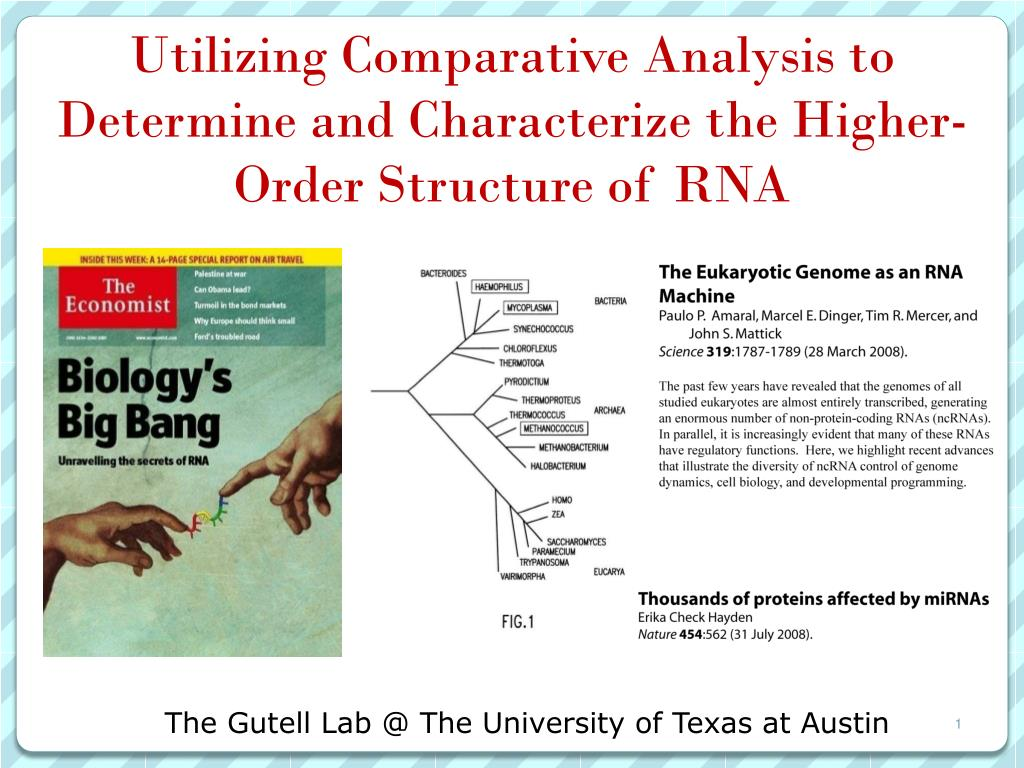 utilizing comparative analysis to determine and characterize the higher order structure of rna l.