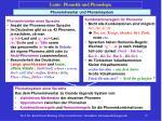laute phonetik und phonologie18