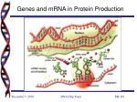 genes and mrna in protein production8