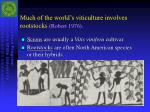 much of the world s viticulture involves rootstocks robert 1976