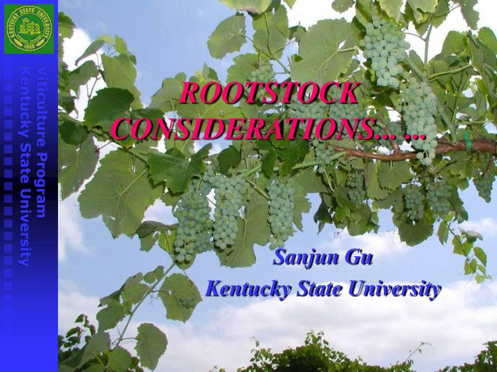 rootstock considerations n.