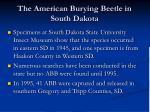 the american burying beetle in south dakota