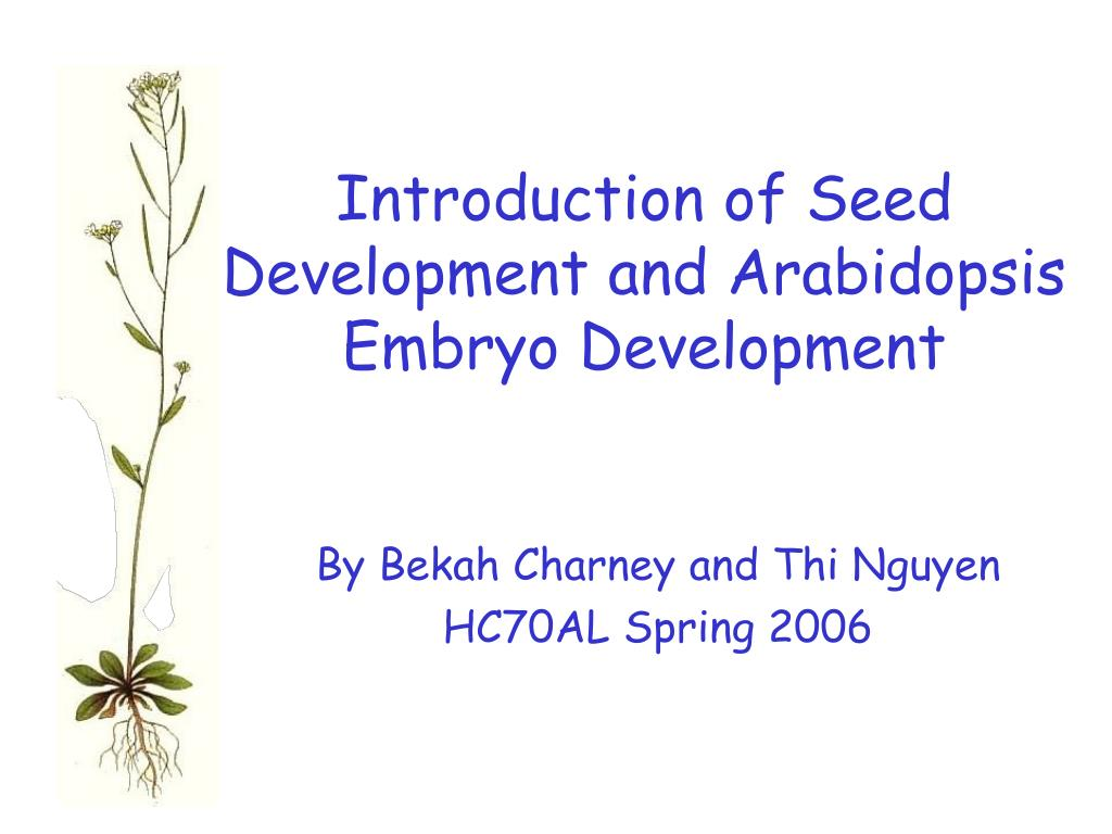 introduction of seed development and arabidopsis embryo development l.
