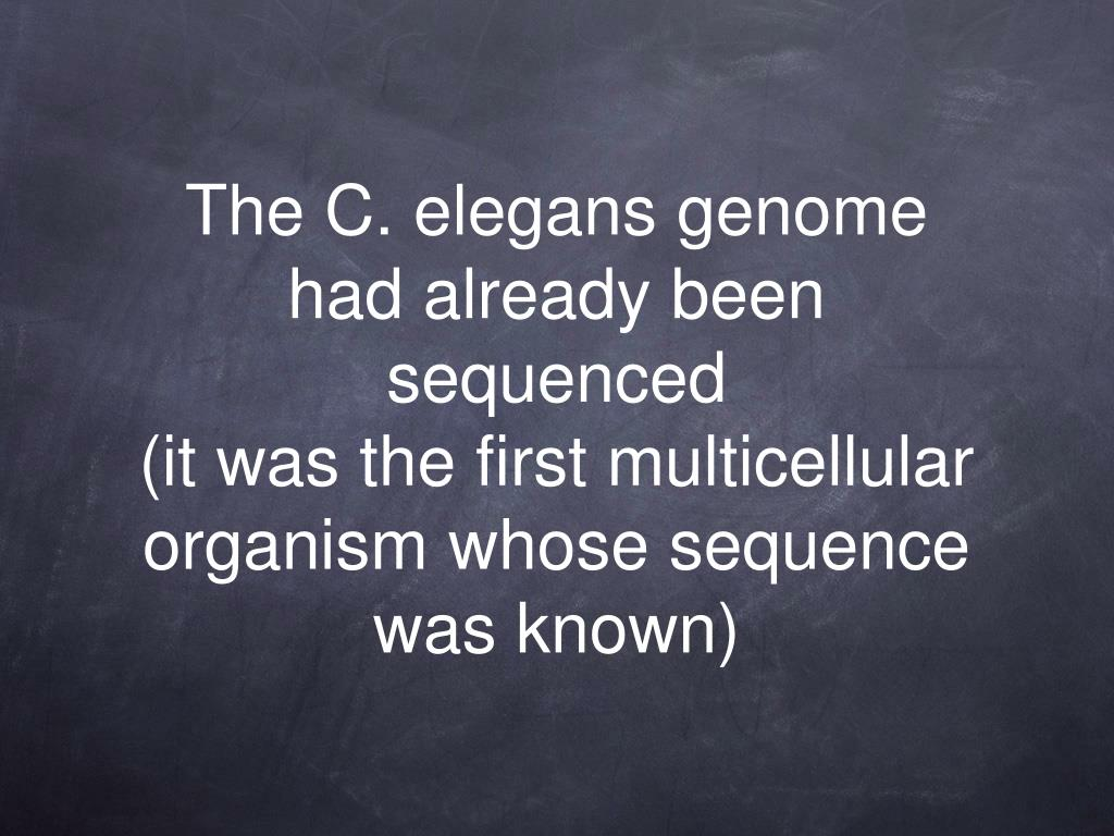 The C. elegans genome had already been sequenced