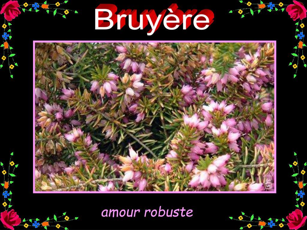 Bruyère