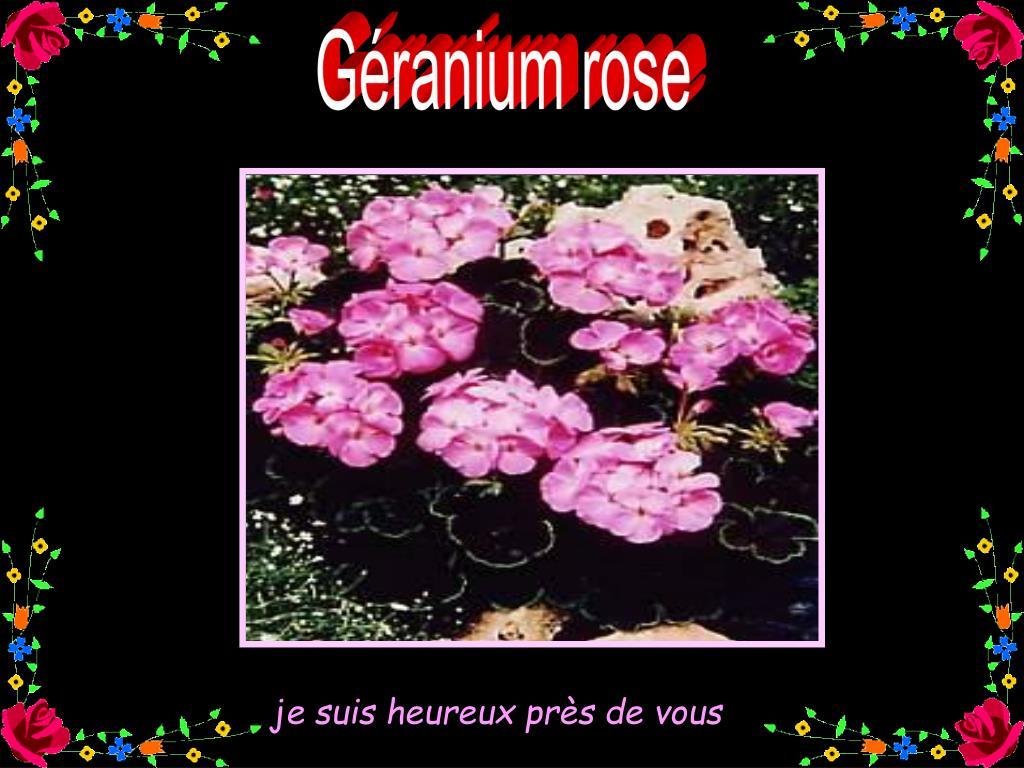 Géranium rose
