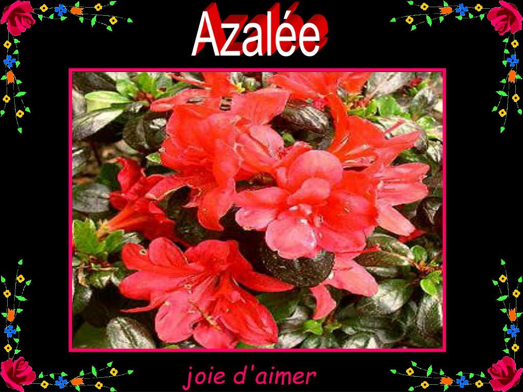 Azalée