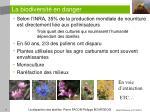 la biodiversit en danger8