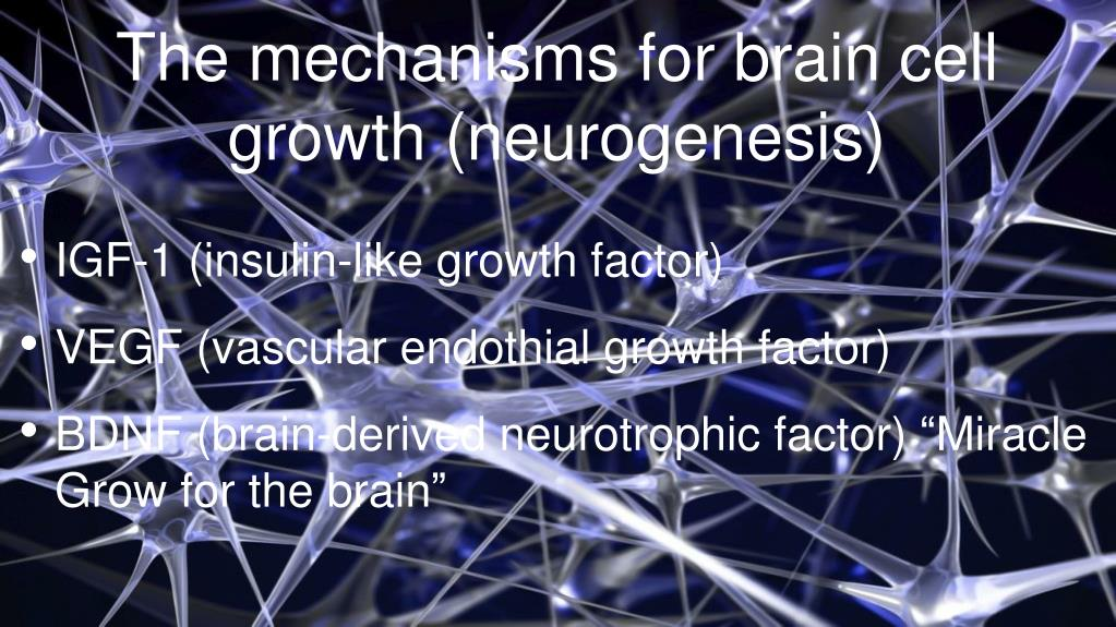 The mechanisms for brain cell growth (neurogenesis)