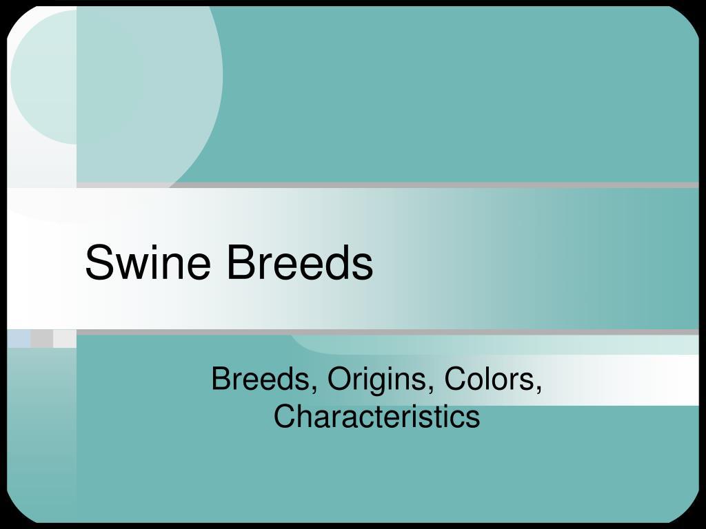 swine breeds l.