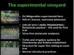 the experimental vineyard