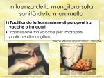 influenza della mungitura sulla sanit della mammella52