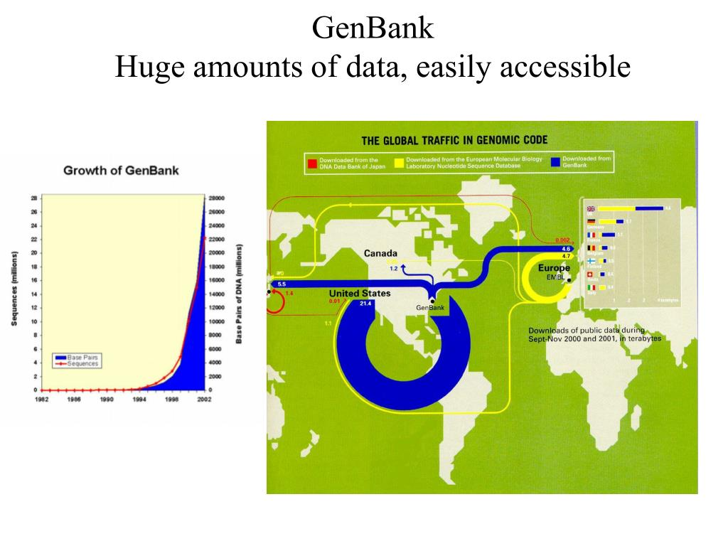 genbank huge amounts of data easily accessible l.