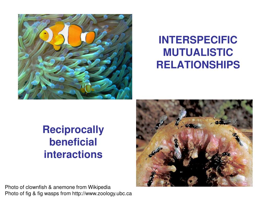 interspecific mutualistic relationships l.