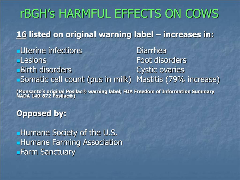 rBGH's HARMFUL EFFECTS ON COWS