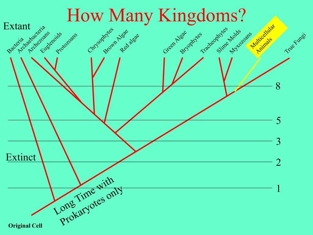 how many kingdoms l.