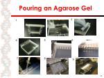 pouring an agarose gel