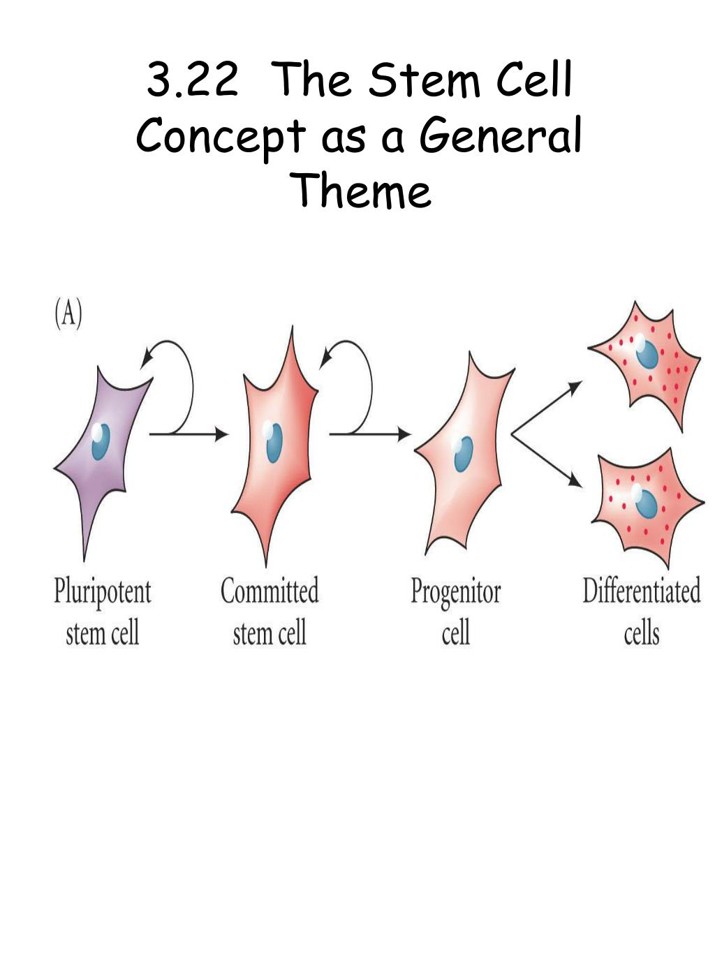 3.22  The Stem Cell Concept as a General Theme