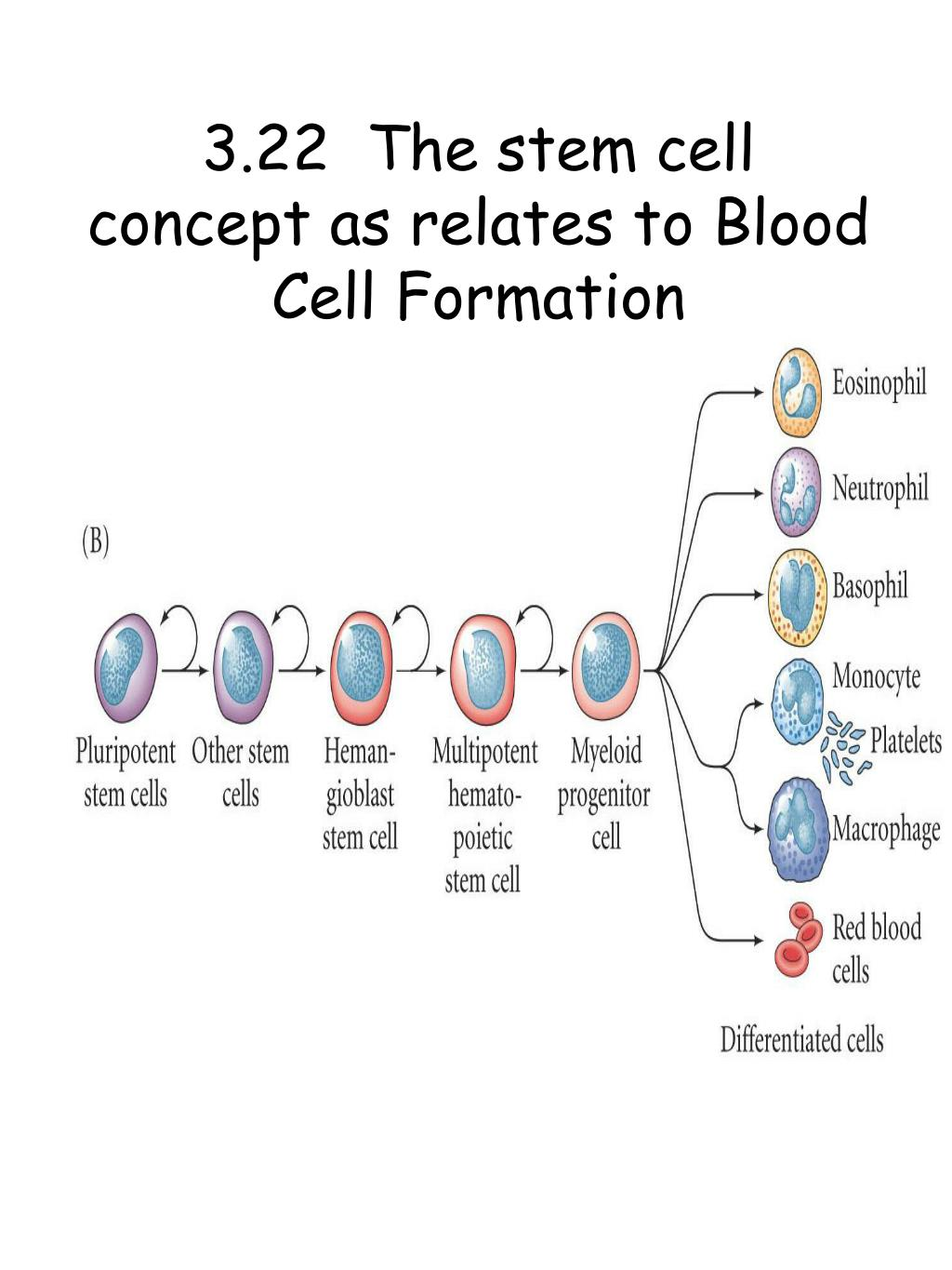 3.22  The stem cell concept as relates to Blood Cell Formation