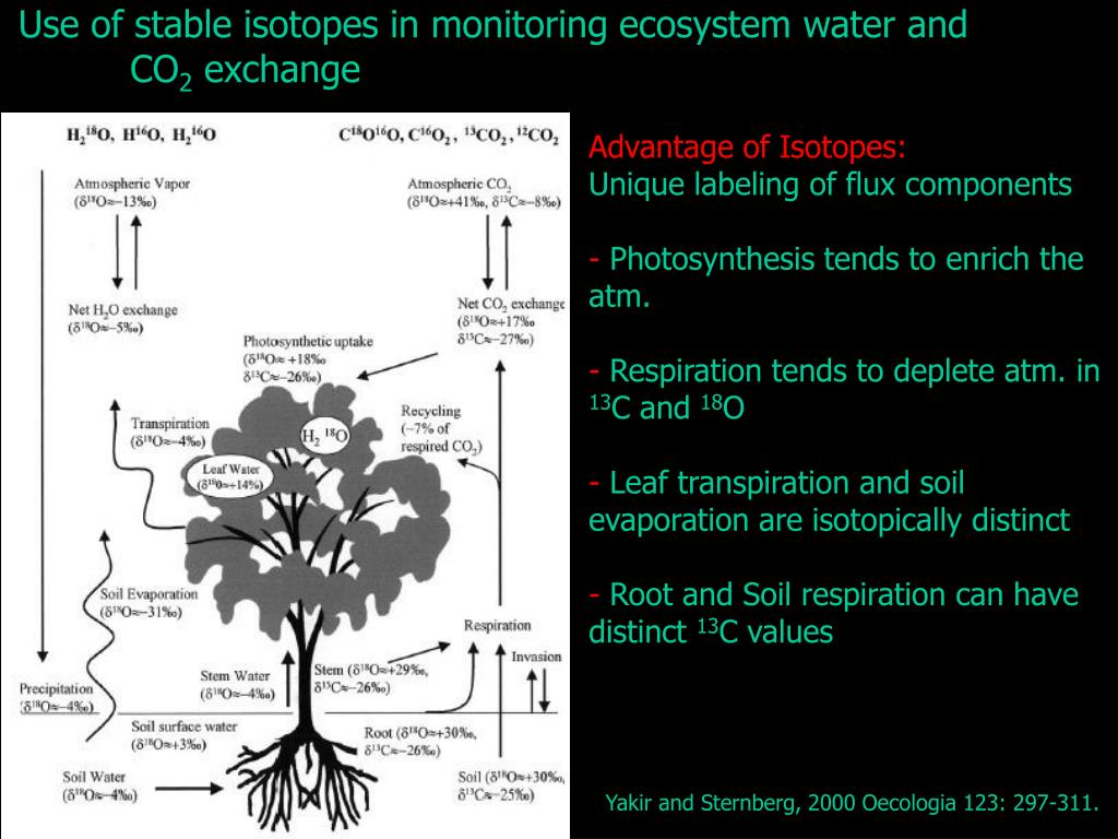 Use of stable isotopes in monitoring ecosystem water and