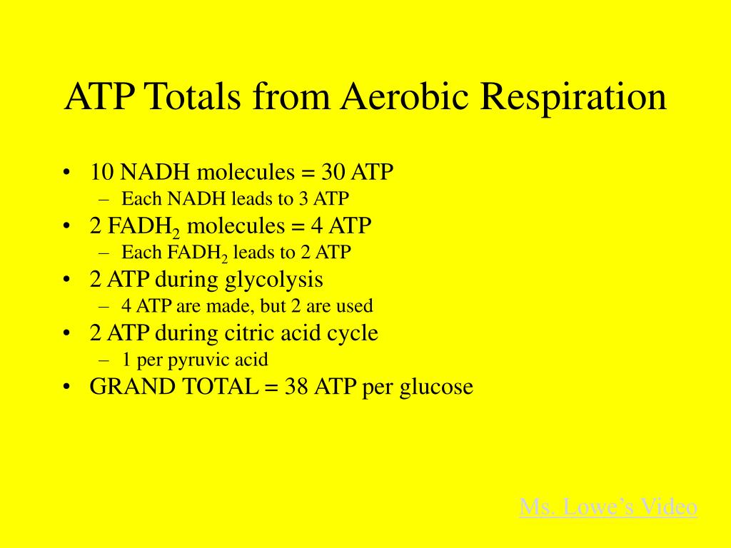 ATP Totals from Aerobic Respiration
