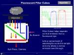 fluorescent filter cubes72