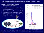 naadp induced ca 2 release in breast cancer cells
