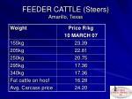 feeder cattle steers amarillo texas