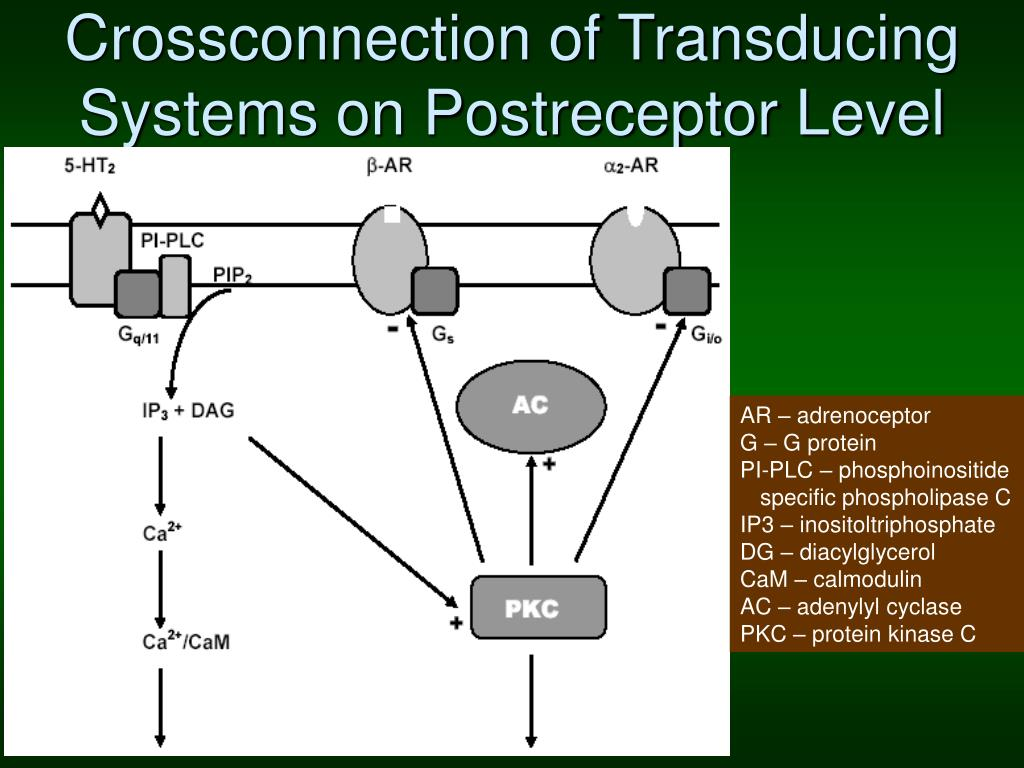 Crossconnection of Transducing Systems on Postreceptor Level