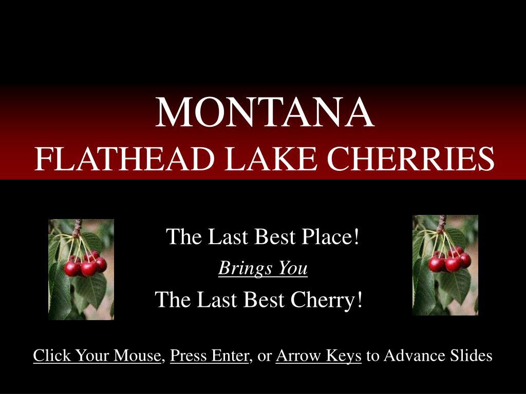 montana flathead lake cherries l.