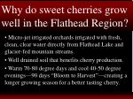 why do sweet cherries grow well in the flathead region