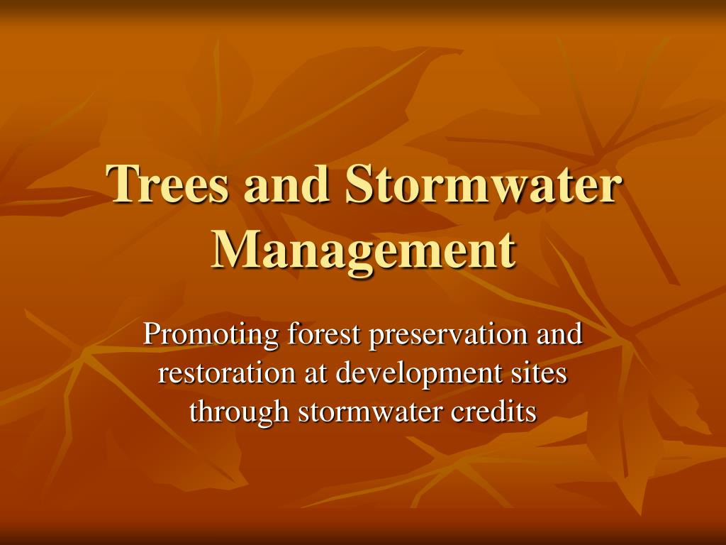 trees and stormwater management l.