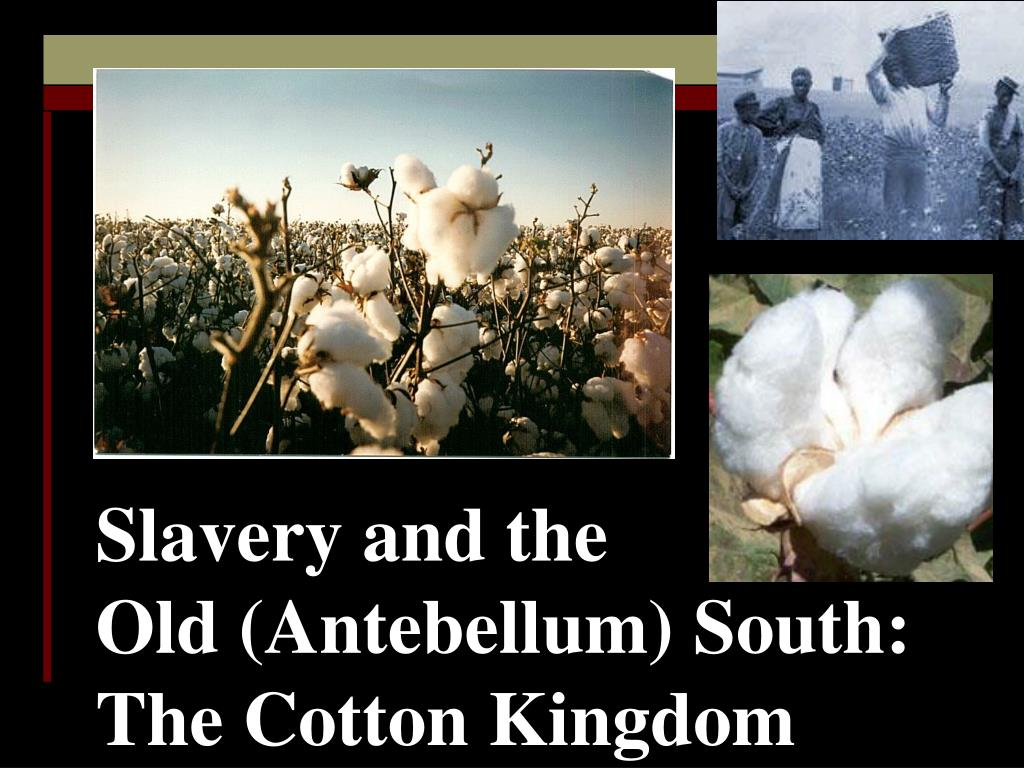 slavery and the old antebellum south the cotton kingdom l.