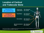 location of cortical and trabecular bone
