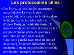 les protozoaires cili s