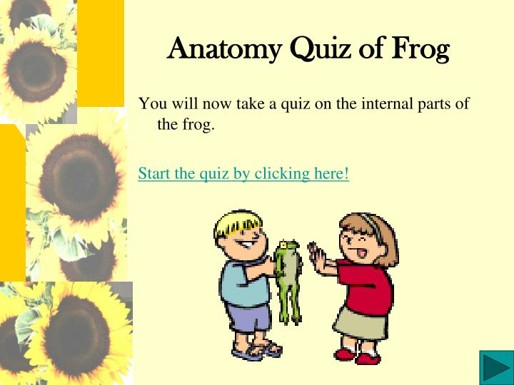 PPT - Anatomy Quiz of Frog PowerPoint Presentation - ID:234611