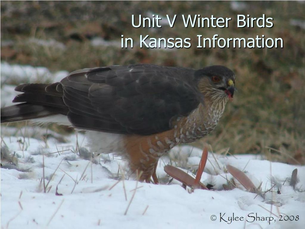 unit v winter birds in kansas information l.