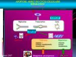 apoptose arret du cycle cellulaire reparation tolerance