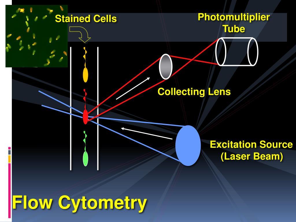 Phd thesis flow cytometry