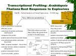 transcriptional profiling arabidopsis thaliana root responses to explosives