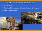 plants seedling and seed sources