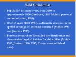 wild chinchillas8