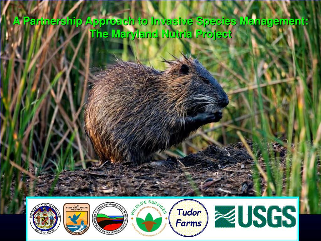 a partnership approach to invasive species management the maryland nutria project l.